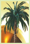 Preserved Tropical Date Palm