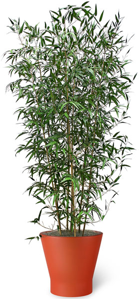 Wild Bamboo Artificial
